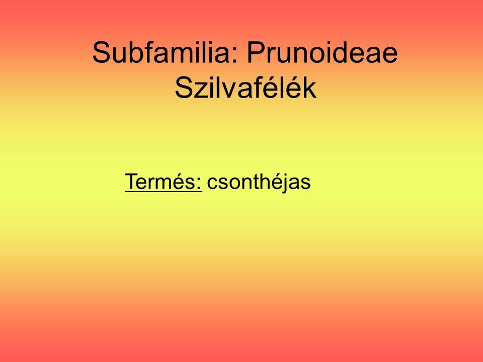 Subfamilia: Prunoideae Szilvafélék Termés: csonthéjas