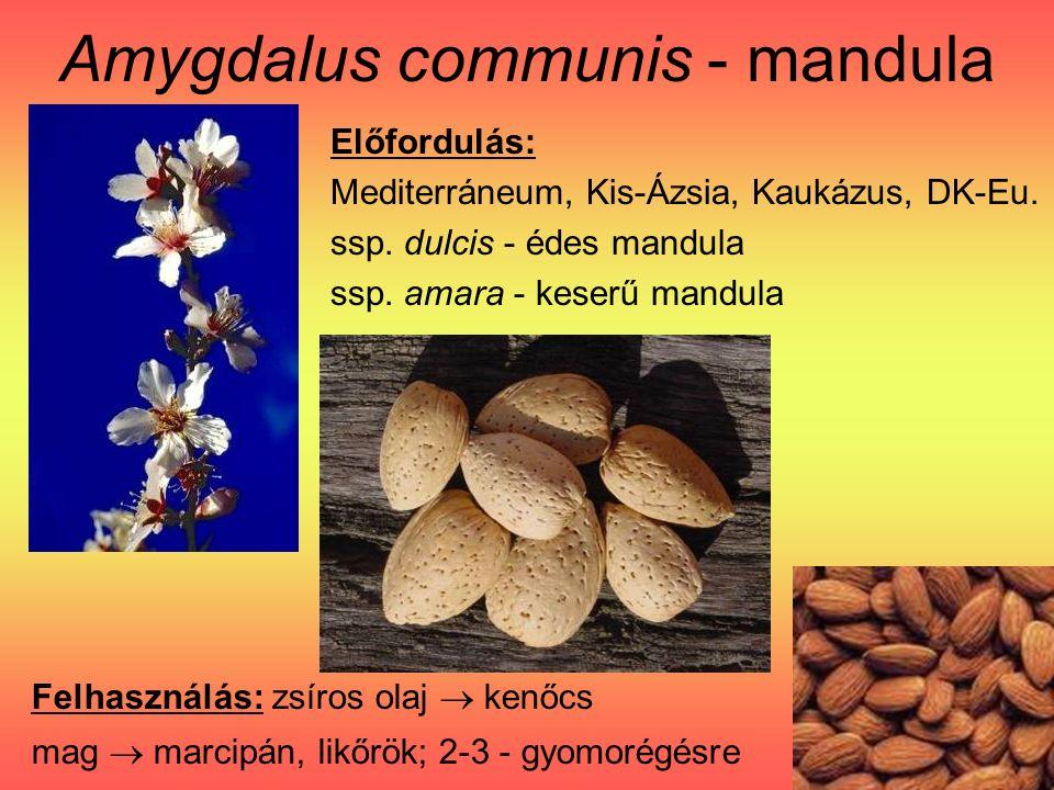 Amygdalus communis - mandula Előfordulás: Mediterráneum, Kis-Ázsia, Kaukázus, DK-Eu.
