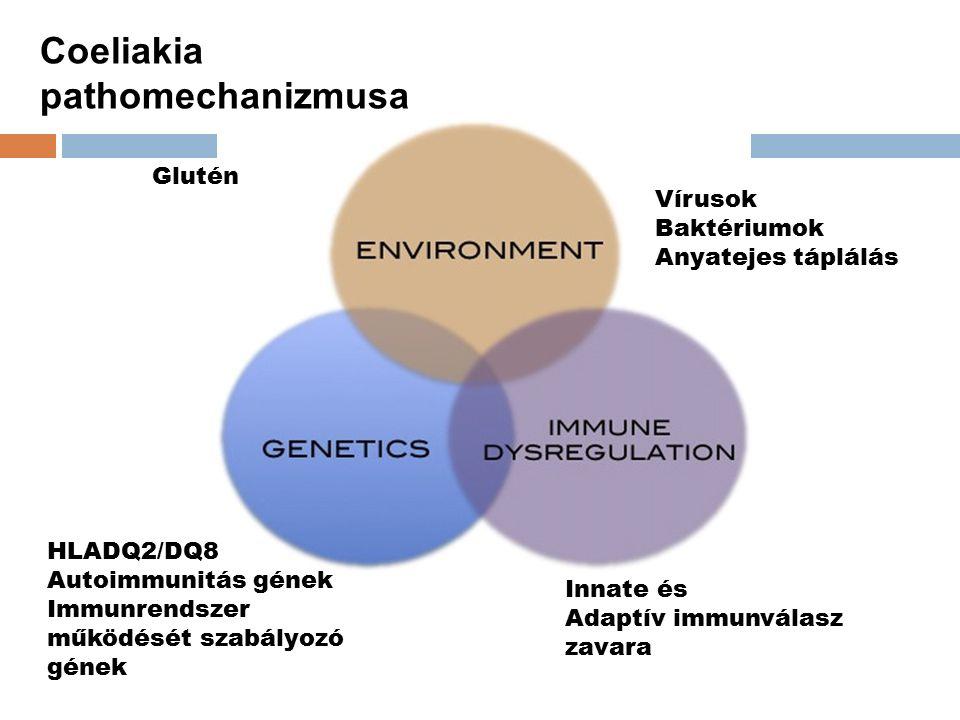 Vírusok Baktériumok Anyatejes táplálás Innate és Adaptív immunválasz zavara HLADQ2/DQ8 Autoimmunitás gének Immunrendszer működését szabályozó gének Glutén Coeliakia pathomechanizmusa