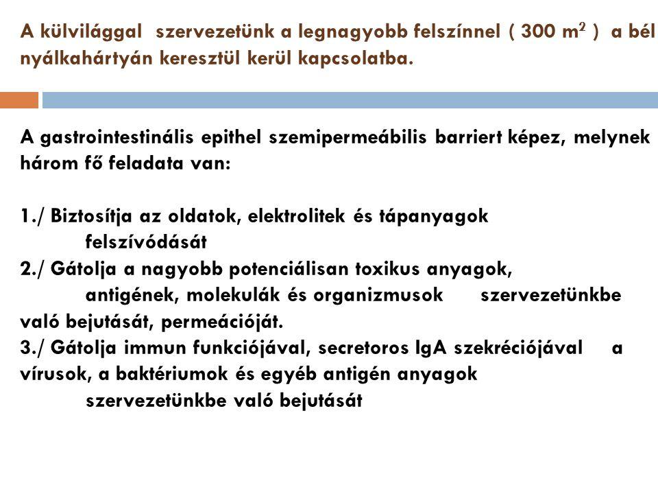 Leggyakoribb kórokozók  Oropharingealis  Streptococcus spp.