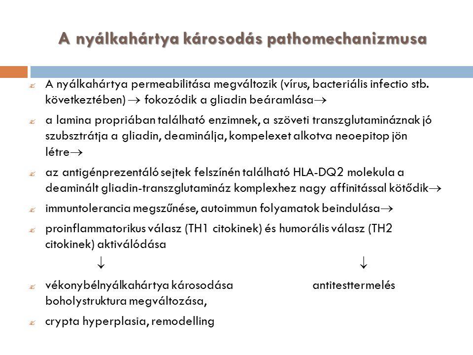 A nyálkahártya károsodás pathomechanizmusa  A nyálkahártya permeabilitása megváltozik (vírus, bacteriális infectio stb.