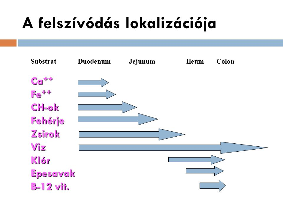 A felszívódás lokalizációja SubstratDuodenum Jejunum Ileum Colon Ca ++ Fe ++ CH-okFehérjeZsirokVizKlórEpesavak B-12 vit.