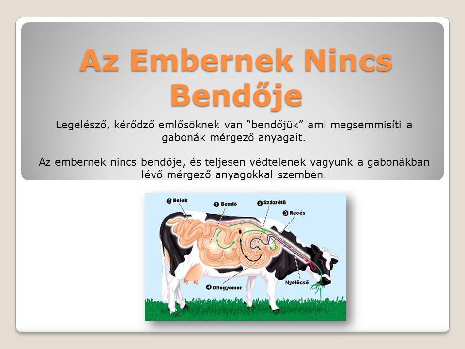 Az Embernek Nincs Bendője Legelésző, kérődző emlősöknek van bendőjük ami megsemmisíti a gabonák mérgező anyagait.
