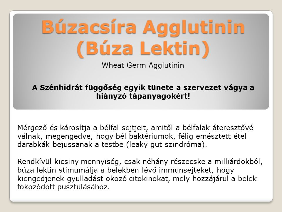 Búzacsíra Agglutinin (Búza Lektin) Mérgező és károsítja a bélfal sejtjeit, amitől a bélfalak áteresztővé válnak, megengedve, hogy bél baktériumok, félig emésztett étel darabkák bejussanak a testbe (leaky gut szindróma).