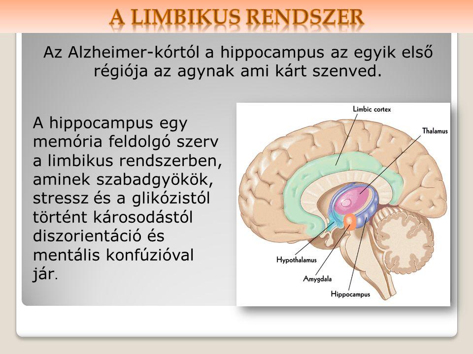 A hippocampus egy memória feldolgó szerv a limbikus rendszerben, aminek szabadgyökök, stressz és a glikózistól történt károsodástól diszorientáció és mentális konfúzióval jár.