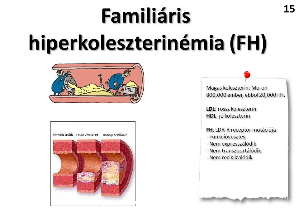 Familiáris hiperkoleszterinémia (FH) Familiáris hiperkoleszterinémia (FH) 15 Magas koleszterin: Mo-on 800,000 ember, ebből 20,000 FH.