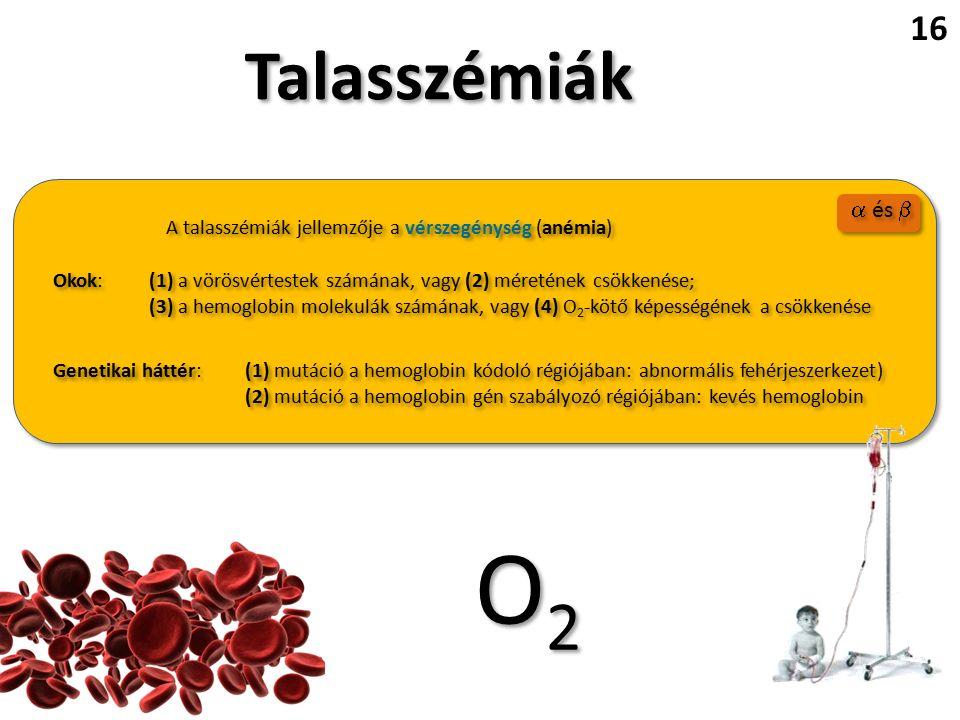 Talasszémiák A talasszémiák jellemzője a vérszegénység (anémia) Okok:(1) a vörösvértestek számának, vagy (2) méretének csökkenése; (3) a hemoglobin molekulák számának, vagy (4) O 2 -kötő képességének a csökkenése Okok:(1) a vörösvértestek számának, vagy (2) méretének csökkenése; (3) a hemoglobin molekulák számának, vagy (4) O 2 -kötő képességének a csökkenése Genetikai háttér:(1) mutáció a hemoglobin kódoló régiójában: abnormális fehérjeszerkezet) (2) mutáció a hemoglobin gén szabályozó régiójában: kevés hemoglobin Genetikai háttér:(1) mutáció a hemoglobin kódoló régiójában: abnormális fehérjeszerkezet) (2) mutáció a hemoglobin gén szabályozó régiójában: kevés hemoglobin 16 O2O2 O2O2  és 