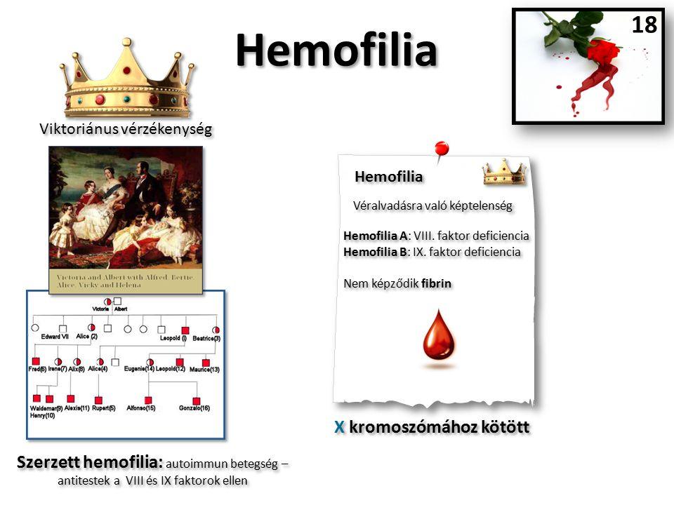 Hemofilia Véralvadásra való képtelenség Hemofilia A: VIII.