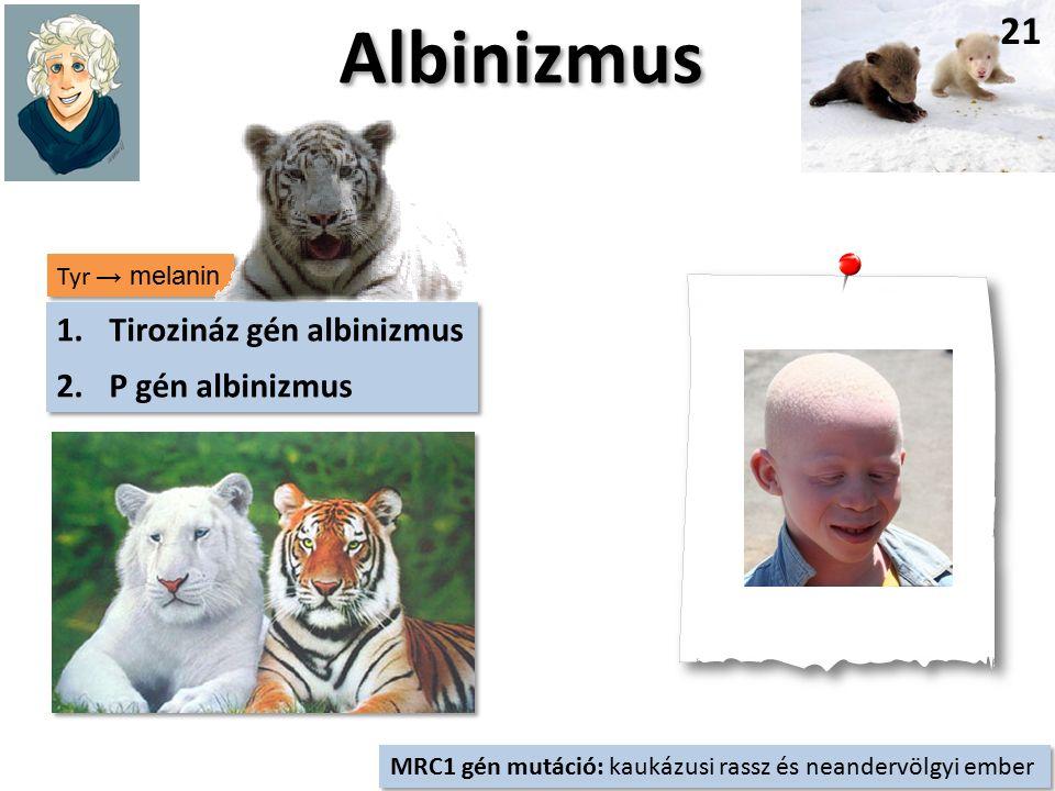 Tyr → melanin Albinizmus 21 1.Tirozináz gén albinizmus 2.P gén albinizmus 1.Tirozináz gén albinizmus 2.P gén albinizmus MRC1 gén mutáció: kaukázusi rassz és neandervölgyi ember