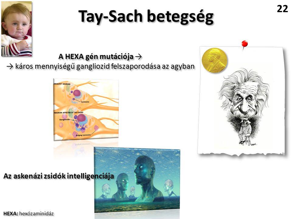 Tay-Sach betegség 22 A HEXA gén mutációja → → káros mennyiségű gangliozid felszaporodása az agyban A HEXA gén mutációja → → káros mennyiségű gangliozid felszaporodása az agyban Az askenázi zsidók intelligenciája HEXA: hexózaminidáz