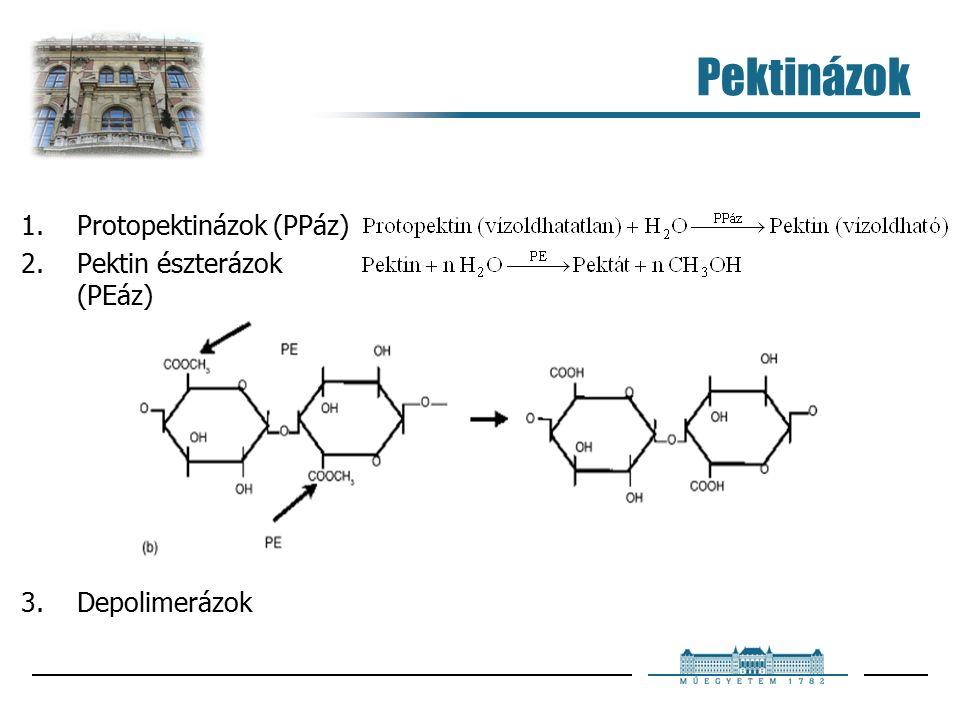 Pektinázok 1.Protopektinázok (PPáz) 2.Pektin észterázok (PEáz) 3.Depolimerázok