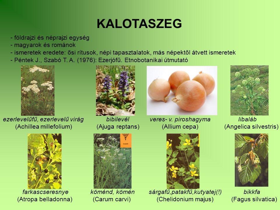 KALOTASZEG - földrajzi és néprajzi egység - magyarok és románok - ismeretek eredete: ősi rítusok, népi tapasztalatok, más népektől átvett ismeretek -