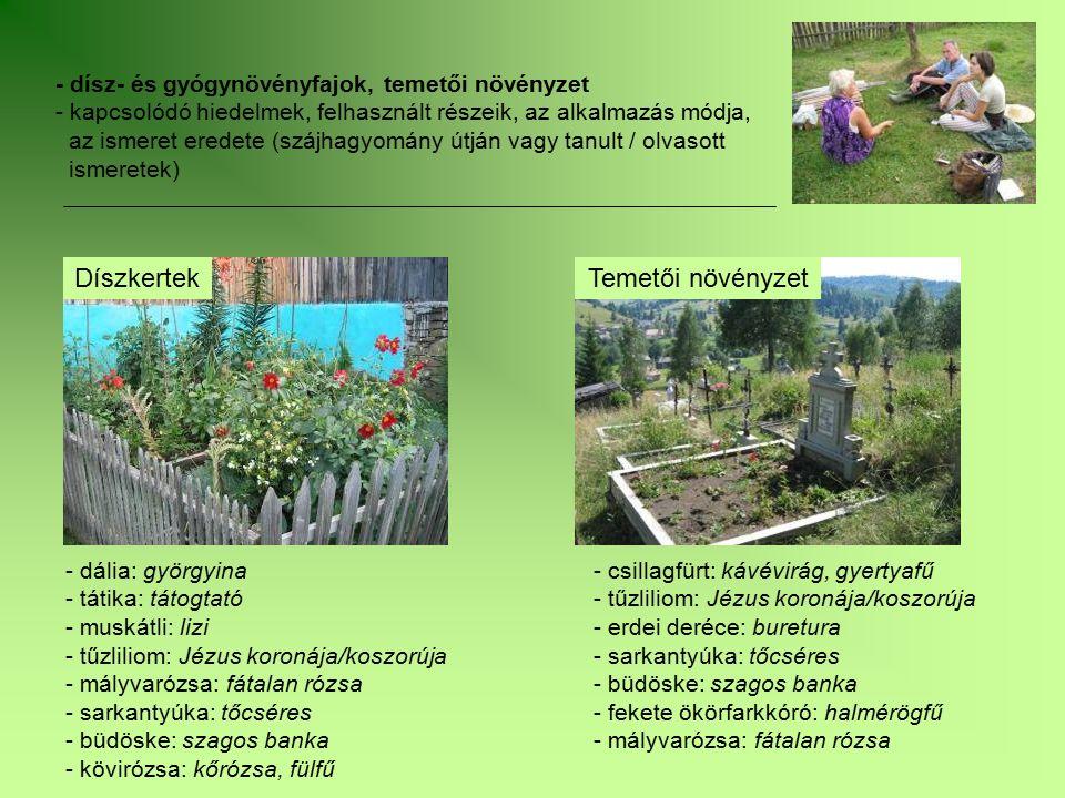 - dísz- és gyógynövényfajok, temetői növényzet - kapcsolódó hiedelmek, felhasznált részeik, az alkalmazás módja, az ismeret eredete (szájhagyomány útj