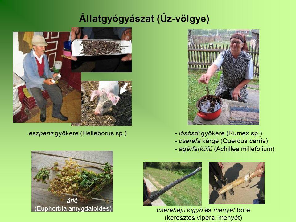 Állatgyógyászat (Úz-völgye) eszpenz gyökere (Helleborus sp.) - lósósdi gyökere (Rumex sp.) - cserefa kérge (Quercus cerris) - egérfarkúfű (Achillea mi