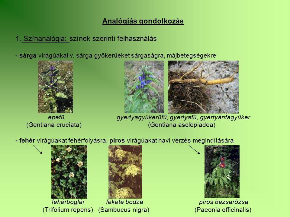 Analógiás gondolkozás 1. Színanalógia: színek szerinti felhasználás - sárga virágúakat v. sárga gyökerűeket sárgaságra, májbetegségekre epefű gyertyag