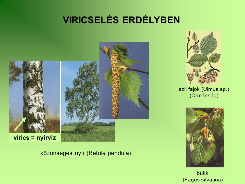 csihán (Urtica dioica) rontóburján szúrós gyöngyalja (Senecio vulgaris) (Leonurus cardiaca) urmusor (Filipendula ulmaria) békaláb kőméz hideg- és fodorminta (Equisetum arvense) (Polypodium vulgare) (Mentha x piperita és M.