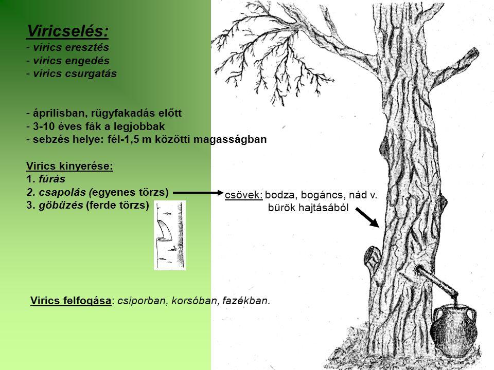 Viricselés: - virics eresztés - virics engedés - virics csurgatás - áprilisban, rügyfakadás előtt - 3-10 éves fák a legjobbak - sebzés helye: fél-1,5