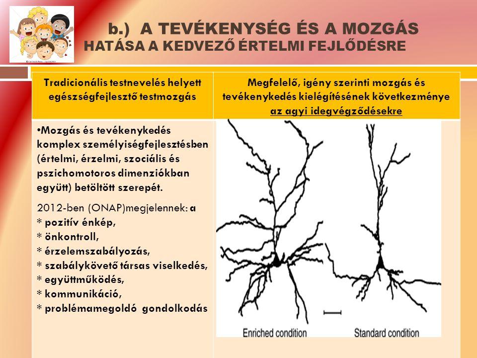 b.) A TEVÉKENYSÉG ÉS A MOZGÁS HATÁSA A KEDVEZŐ ÉRTELMI FEJLŐDÉSRE Tradicionális testnevelés helyett egészségfejlesztő testmozgás Megfelelő, igény szerinti mozgás és tevékenykedés kielégítésének következménye az agyi idegvégződésekre Mozgás és tevékenykedés komplex személyiségfejlesztésben (értelmi, érzelmi, szociális és pszichomotoros dimenziókban együtt) betöltött szerepét.