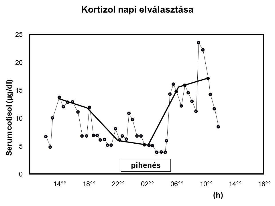Kortizol napi elválasztása 25 20 15 10 5 0 22°°10°°14°°18°°02°°06°°18°°14°° (h) pihenés Serum cotisol (µg/dl)