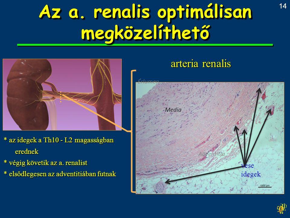 * az idegek a Th10 - L2 magasságban erednek * végig követik az a.