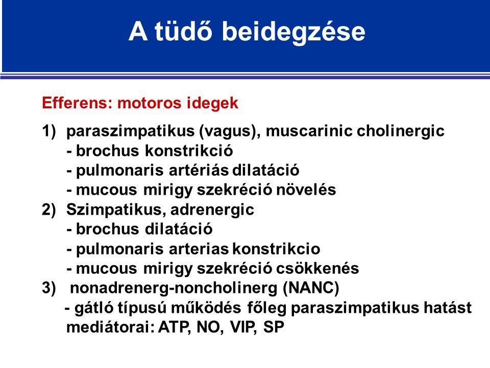 1)paraszimpatikus (vagus), muscarinic cholinergic - brochus konstrikció - pulmonaris artériás dilatáció - mucous mirigy szekréció növelés 2)Szimpatikus, adrenergic - brochus dilatáció - pulmonaris arterias konstrikcio - mucous mirigy szekréció csökkenés 3) nonadrenerg-noncholinerg (NANC) - gátló típusú működés főleg paraszimpatikus hatást mediátorai: ATP, NO, VIP, SP Efferens: motoros idegek A tüdő beidegzése