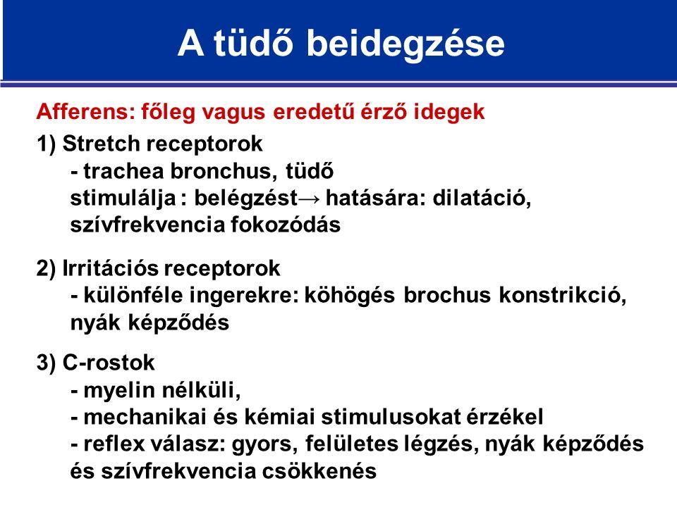 Afferens: főleg vagus eredetű érző idegek 1) Stretch receptorok - trachea bronchus, tüdő stimulálja : belégzést→ hatására: dilatáció, szívfrekvencia fokozódás 2) Irritációs receptorok - különféle ingerekre: köhögés brochus konstrikció, nyák képződés 3) C-rostok - myelin nélküli, - mechanikai és kémiai stimulusokat érzékel - reflex válasz: gyors, felületes légzés, nyák képződés és szívfrekvencia csökkenés A tüdő beidegzése