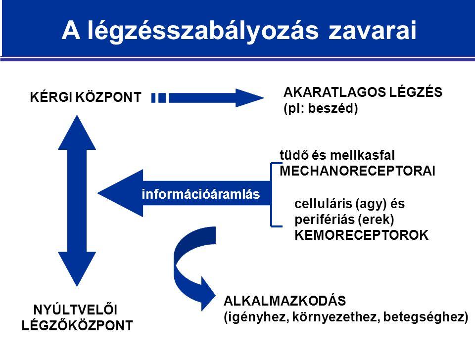 AKARATLAGOS LÉGZÉS (pl: beszéd) KÉRGI KÖZPONT ALKALMAZKODÁS (igényhez, környezethez, betegséghez) tüdő és mellkasfal MECHANORECEPTORAI celluláris (agy) és perifériás (erek) KEMORECEPTOROK információáramlás NYÚLTVELŐI LÉGZŐKÖZPONT A légzésszabályozás zavarai