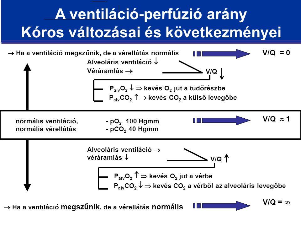 A ventiláció-perfúzió arány Kóros változásai és következményei normális ventiláció,- pO 2 100 Hgmm normális vérellátás - pCO 2 40 Hgmm V/Q =   Ha a ventiláció megszűnik, de a vérellátás normális V/Q = 0 V/Q  1 Alveoláris ventiláció  véráramlás   Ha a ventiláció megszűnik, de a vérellátás normális Alveoláris ventiláció  Véráramlás  P alv O 2   kevés O 2 jut a tüdőrészbe P alv CO 2   kevés CO 2 a külső levegőbe V/Q P alv O 2   kevés O 2 jut a vérbe P alv CO 2   kevés CO 2 a vérből az alveoláris levegőbe V/Q