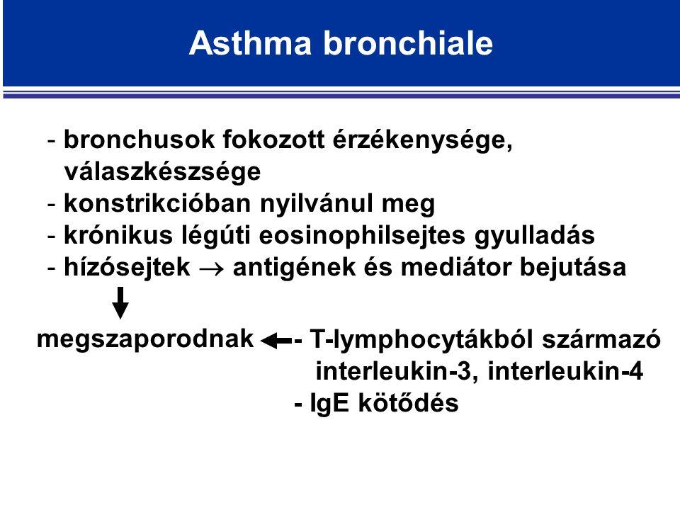 - bronchusok fokozott érzékenysége, válaszkészsége - konstrikcióban nyilvánul meg - krónikus légúti eosinophilsejtes gyulladás - hízósejtek  antigének és mediátor bejutása Asthma bronchiale megszaporodnak - T-lymphocytákból származó interleukin-3, interleukin-4 - IgE kötődés