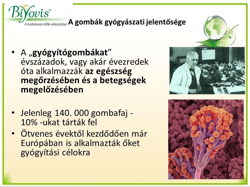 """A gombák gyógyászati jelentősége A """"gyógyítógombákat évszázadok, vagy akár évezredek óta alkalmazzák az egészség megőrzésében és a betegségek megelőzésében Jelenleg 140."""