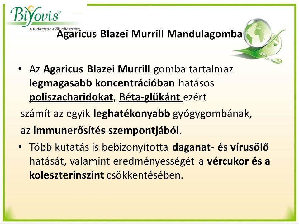 Agaricus Blazei Murrill Mandulagomba Az Agaricus Blazei Murrill gomba tartalmaz legmagasabb koncentrációban hatásos poliszacharidokat, Béta-glükánt ez