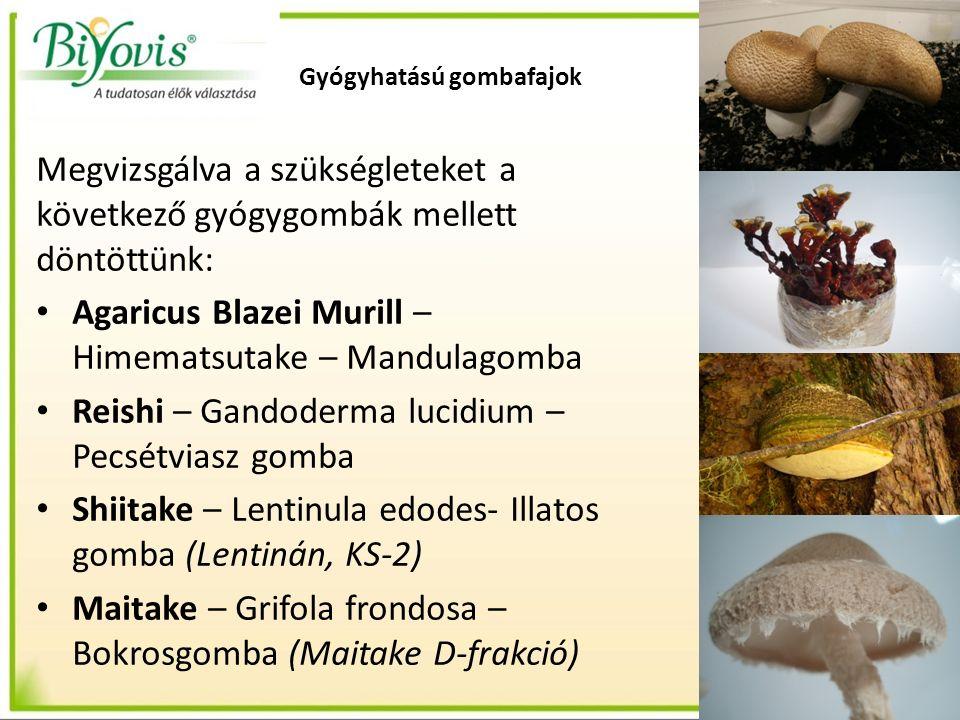 Gyógyhatású gombafajok Megvizsgálva a szükségleteket a következő gyógygombák mellett döntöttünk: Agaricus Blazei Murill – Himematsutake – Mandulagomba