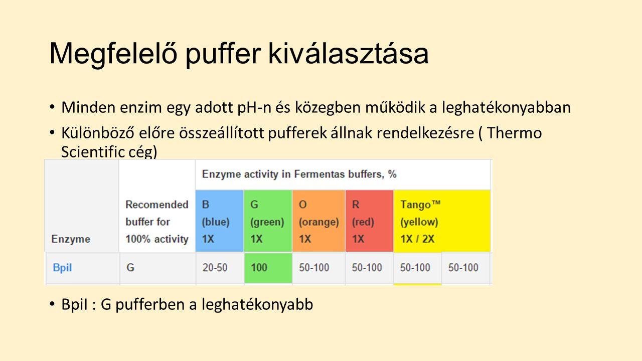 Megfelelő puffer kiválasztása Minden enzim egy adott pH-n és közegben működik a leghatékonyabban Különböző előre összeállított pufferek állnak rendelkezésre ( Thermo Scientific cég) BpiI : G pufferben a leghatékonyabb