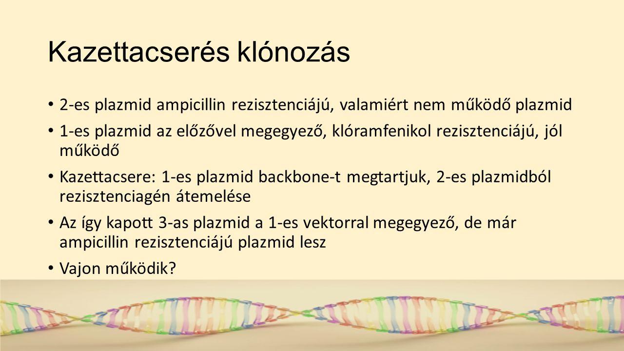 Kazettacserés klónozás 2-es plazmid ampicillin rezisztenciájú, valamiért nem működő plazmid 1-es plazmid az előzővel megegyező, klóramfenikol rezisztenciájú, jól működő Kazettacsere: 1-es plazmid backbone-t megtartjuk, 2-es plazmidból rezisztenciagén átemelése Az így kapott 3-as plazmid a 1-es vektorral megegyező, de már ampicillin rezisztenciájú plazmid lesz Vajon működik