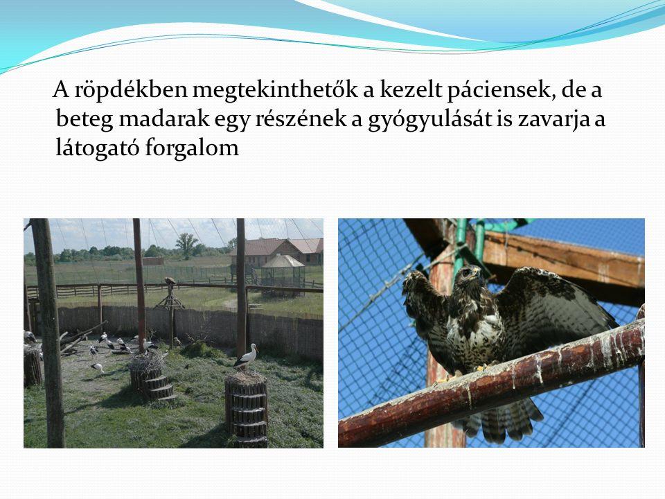A röpdékben megtekinthetők a kezelt páciensek, de a beteg madarak egy részének a gyógyulását is zavarja a látogató forgalom