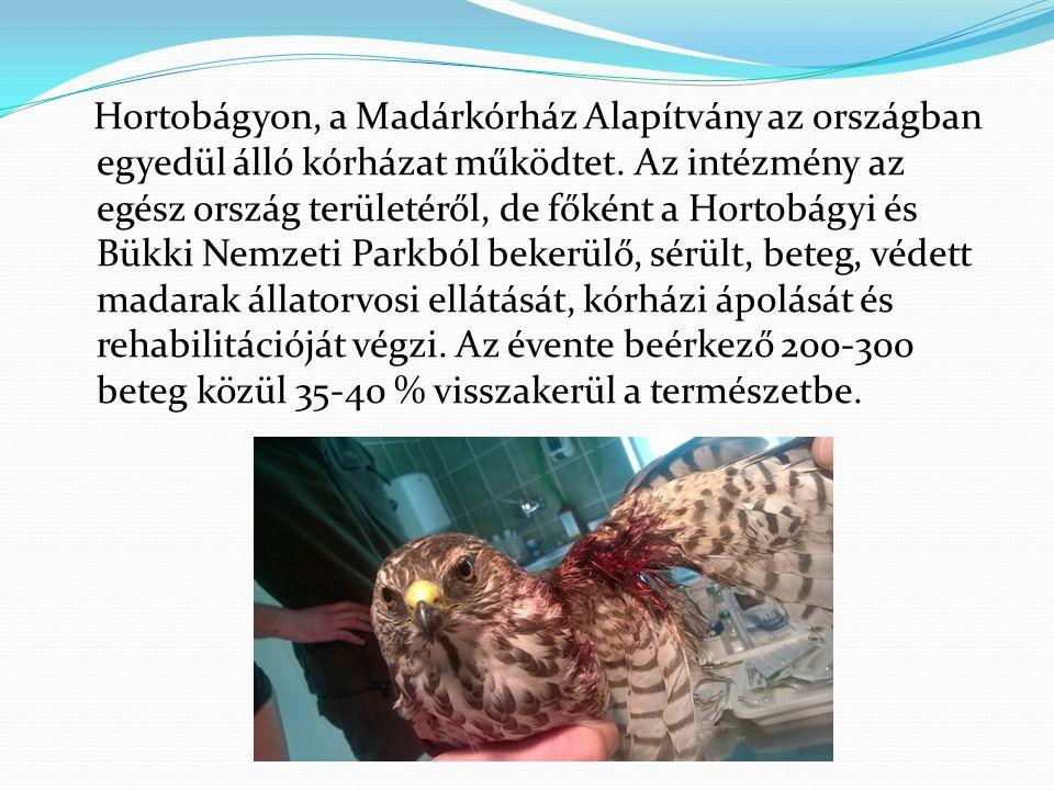 A hortobágyi Madárkórház Alapítvány 12 éve állatvédő civil szervezetként sérült, védett madarak ellátásával, gyógykezelésével foglalkozik.