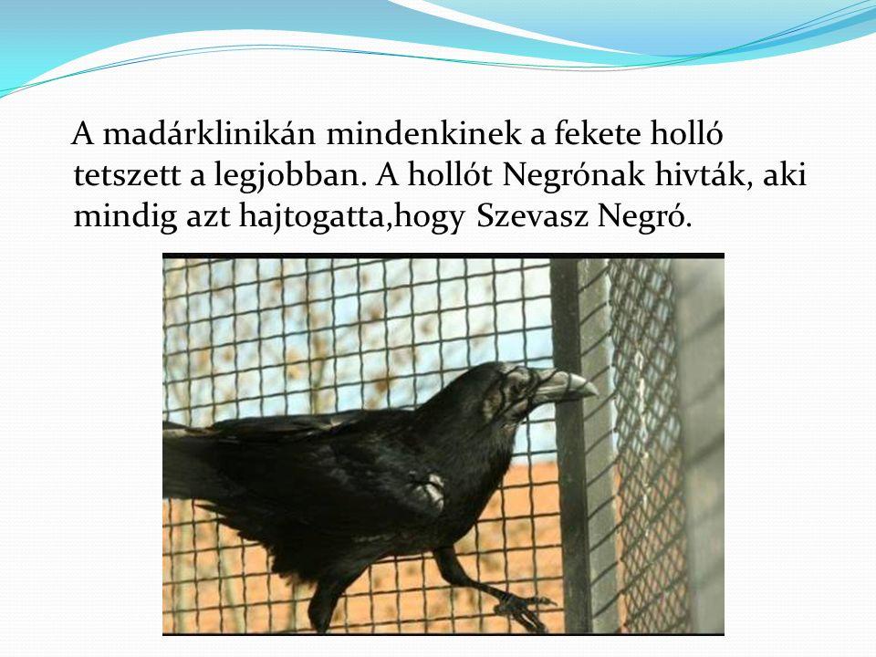 A madárklinikán mindenkinek a fekete holló tetszett a legjobban.