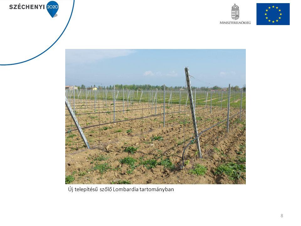 Új telepítésű szőlő Lombardia tartományban 8