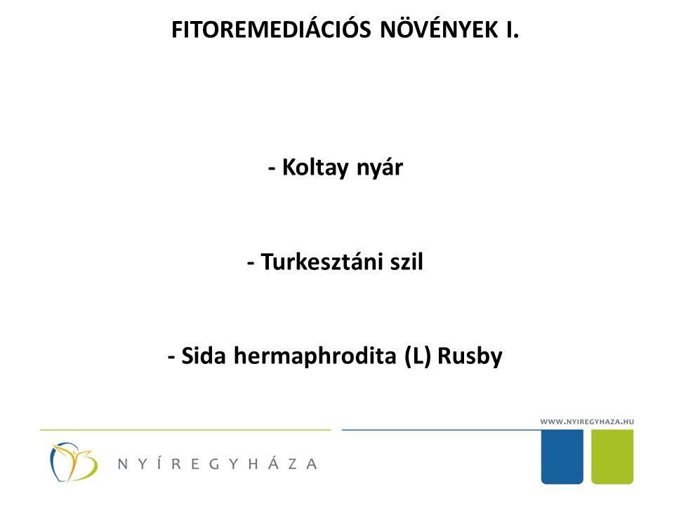 FITOREMEDIÁCIÓS NÖVÉNYEK I. - Koltay nyár - Turkesztáni szil - Sida hermaphrodita (L) Rusby