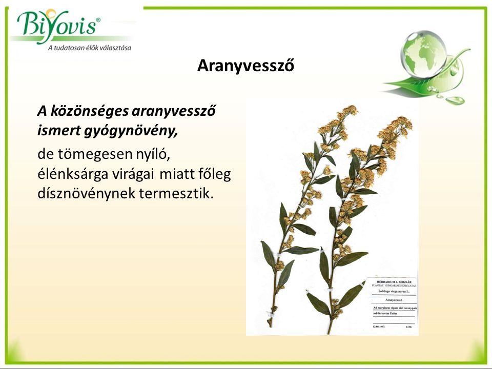 Aranyvessző A közönséges aranyvessző ismert gyógynövény, de tömegesen nyíló, élénksárga virágai miatt főleg dísznövénynek termesztik.