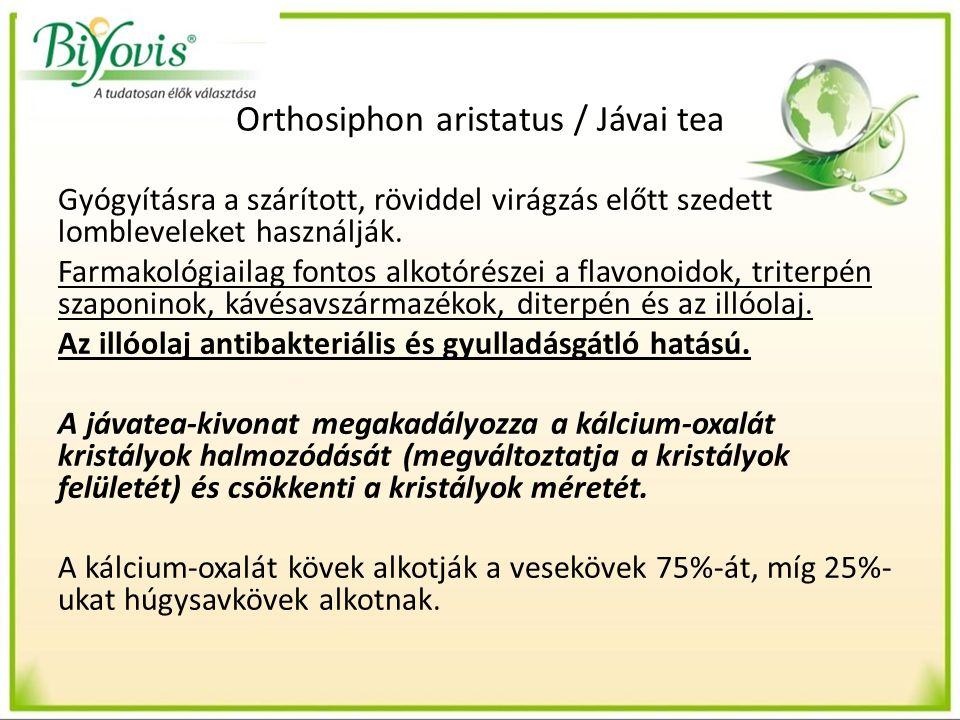 Orthosiphon aristatus / Jávai tea Gyógyításra a szárított, röviddel virágzás előtt szedett lombleveleket használják.