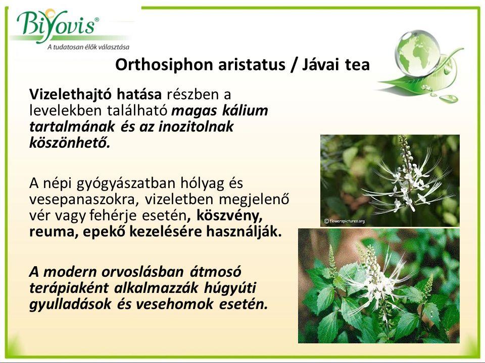 Orthosiphon aristatus / Jávai tea Vizelethajtó hatása részben a levelekben található magas kálium tartalmának és az inozitolnak köszönhető.