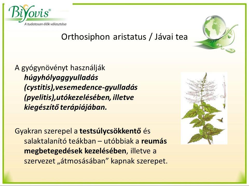 Orthosiphon aristatus / Jávai tea A gyógynövényt használják húgyhólyaggyulladás (cystitis),vesemedence-gyulladás (pyelitis),utókezelésében, illetve kiegészítő terápiájában.