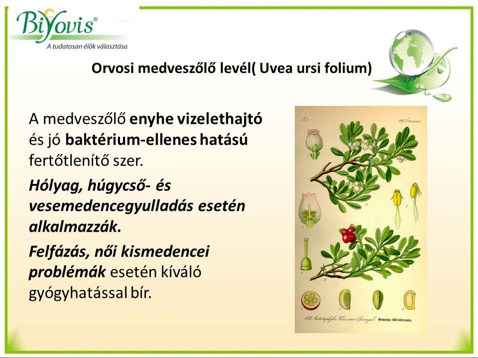 Orvosi medveszőlő levél( Uvea ursi folium) A medveszőlő enyhe vizelethajtó és jó baktérium-ellenes hatású fertőtlenítő szer.