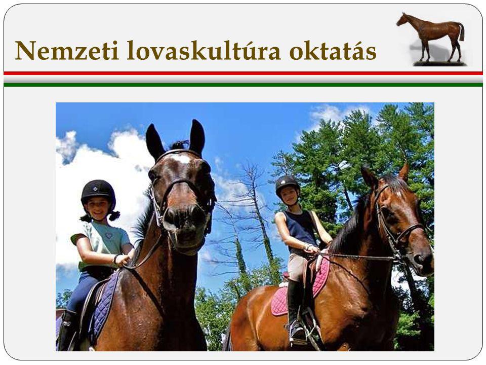 Nemzeti lovaskultúra oktatás
