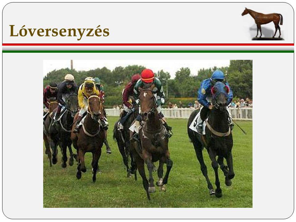 Lóversenyzés
