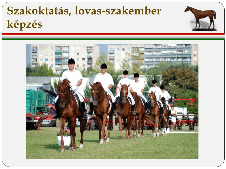 Szakoktatás, lovas-szakember képzés