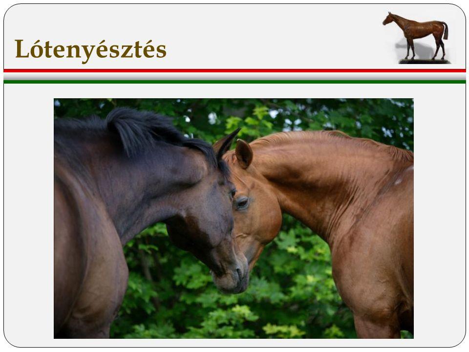 A hagyományos-, és őshonos lófajtáink génmegőrzése mellett a kiváló használati értékkel rendelkező egyedek tenyésztése és piacra juttatása, illetve lovaink szervezett kipróbálása.