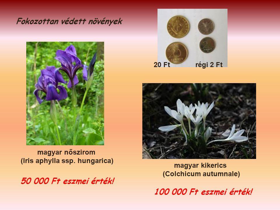 Fokozottan védett növények magyar kikerics (Colchicum autumnale) 100 000 Ft eszmei érték.