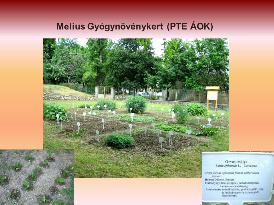 Melius Gyógynövénykert (PTE ÁOK)